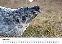 Grey Seal Pups of Donna Nook (Wall Calendar 2019 DIN A4 Landscape) - Produktdetailbild 3