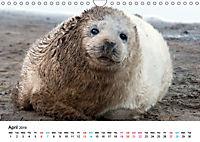 Grey Seal Pups of Donna Nook (Wall Calendar 2019 DIN A4 Landscape) - Produktdetailbild 4