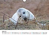Grey Seal Pups of Donna Nook (Wall Calendar 2019 DIN A4 Landscape) - Produktdetailbild 7