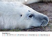 Grey Seal Pups of Donna Nook (Wall Calendar 2019 DIN A4 Landscape) - Produktdetailbild 11