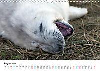 Grey Seal Pups of Donna Nook (Wall Calendar 2019 DIN A4 Landscape) - Produktdetailbild 8