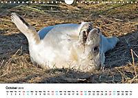 Grey Seal Pups of Donna Nook (Wall Calendar 2019 DIN A4 Landscape) - Produktdetailbild 10
