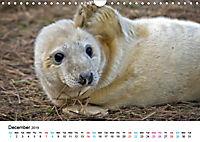 Grey Seal Pups of Donna Nook (Wall Calendar 2019 DIN A4 Landscape) - Produktdetailbild 12