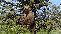 Grizzly Man - Produktdetailbild 7
