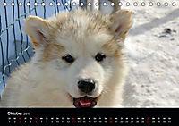 Grönland - Der wilde, weiße Westen (Tischkalender 2019 DIN A5 quer) - Produktdetailbild 10