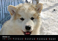Grönland - Der wilde, weiße Westen (Wandkalender 2019 DIN A4 quer) - Produktdetailbild 10