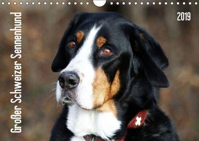 Großer Schweizer Sennenhund (Wandkalender 2019 DIN A4 quer), SchnelleWelten