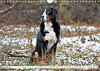 Grosser Schweizer Sennenhund (Wandkalender 2019 DIN A4 quer) - Produktdetailbild 1
