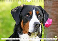 Großer Schweizer Sennenhund (Wandkalender 2019 DIN A4 quer) - Produktdetailbild 7