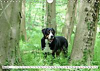 Großer Schweizer Sennenhund (Wandkalender 2019 DIN A4 quer) - Produktdetailbild 5