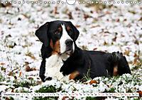 Großer Schweizer Sennenhund (Wandkalender 2019 DIN A4 quer) - Produktdetailbild 12