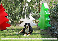 Großer Schweizer Sennenhund (Wandkalender 2019 DIN A4 quer) - Produktdetailbild 11