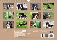 Großer Schweizer Sennenhund (Wandkalender 2019 DIN A4 quer) - Produktdetailbild 13