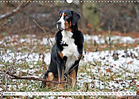 Großer Schweizer Sennenhund (Wandkalender 2019 DIN A3 quer) - Produktdetailbild 1