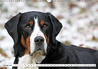 Großer Schweizer Sennenhund (Wandkalender 2019 DIN A3 quer) - Produktdetailbild 2