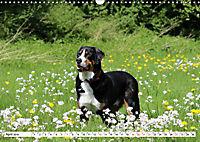 Großer Schweizer Sennenhund (Wandkalender 2019 DIN A3 quer) - Produktdetailbild 4