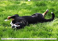 Großer Schweizer Sennenhund (Wandkalender 2019 DIN A3 quer) - Produktdetailbild 10