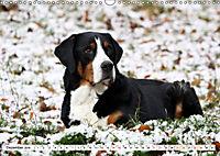 Großer Schweizer Sennenhund (Wandkalender 2019 DIN A3 quer) - Produktdetailbild 12