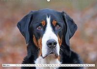 Großer Schweizer Sennenhund (Wandkalender 2019 DIN A2 quer) - Produktdetailbild 3