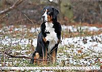 Großer Schweizer Sennenhund (Wandkalender 2019 DIN A2 quer) - Produktdetailbild 1