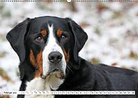 Großer Schweizer Sennenhund (Wandkalender 2019 DIN A2 quer) - Produktdetailbild 2
