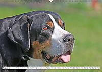 Großer Schweizer Sennenhund (Wandkalender 2019 DIN A2 quer) - Produktdetailbild 8
