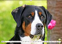 Großer Schweizer Sennenhund (Wandkalender 2019 DIN A2 quer) - Produktdetailbild 7