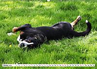 Großer Schweizer Sennenhund (Wandkalender 2019 DIN A2 quer) - Produktdetailbild 10