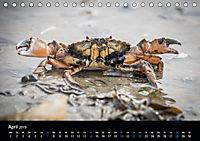 Grüße aus Texel (Tischkalender 2019 DIN A5 quer) - Produktdetailbild 4