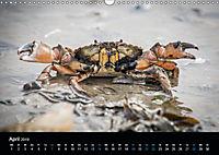 Grüße aus Texel (Wandkalender 2019 DIN A3 quer) - Produktdetailbild 4