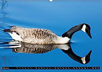 Grüsse von Pellworm (Wandkalender 2019 DIN A2 quer) - Produktdetailbild 7