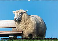 Grüsse von Pellworm (Wandkalender 2019 DIN A2 quer) - Produktdetailbild 5