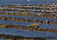 Grüsse von Pellworm (Wandkalender 2019 DIN A2 quer) - Produktdetailbild 10