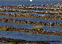 Grüße von Pellworm (Wandkalender 2019 DIN A3 quer) - Produktdetailbild 10