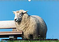 Grüße von Pellworm (Wandkalender 2019 DIN A3 quer) - Produktdetailbild 5