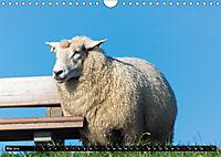 Grüße von Pellworm (Wandkalender 2019 DIN A4 quer) - Produktdetailbild 5