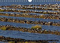 Grüße von Pellworm (Wandkalender 2019 DIN A4 quer) - Produktdetailbild 10