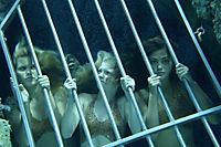 H2O: Plötzlich Meerjungfrau - Staffel 1 - Produktdetailbild 5