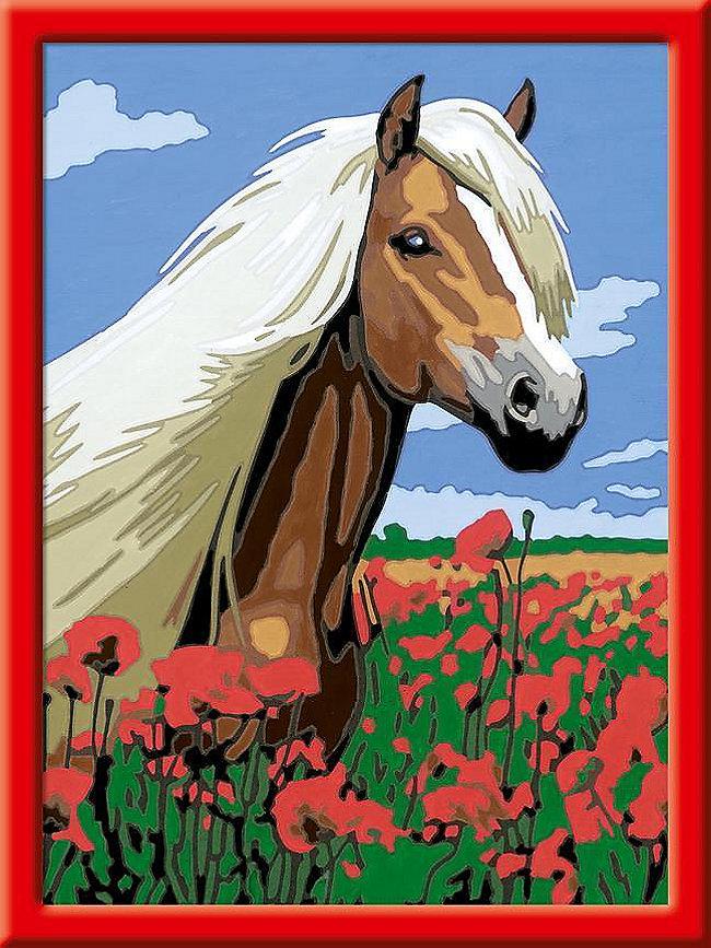 haflinger malen nach zahlen serie d pferde  weltbildde