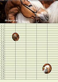 Haflinger Pferde - Stall- und Familienplaner 2019 (Wandkalender 2019 DIN A2 hoch) - Produktdetailbild 12