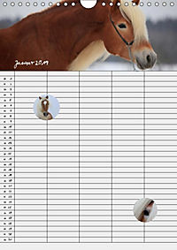 Haflinger Pferde - Stall- und Familienplaner 2019 (Wandkalender 2019 DIN A4 hoch) - Produktdetailbild 3