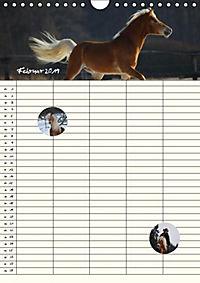 Haflinger Pferde - Stall- und Familienplaner 2019 (Wandkalender 2019 DIN A4 hoch) - Produktdetailbild 6