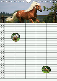 Haflinger Pferde - Stall- und Familienplaner 2019 (Wandkalender 2019 DIN A4 hoch) - Produktdetailbild 4