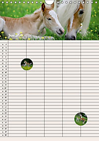 Haflinger Pferde - Stall- und Familienplaner 2019 (Wandkalender 2019 DIN A4 hoch) - Produktdetailbild 7