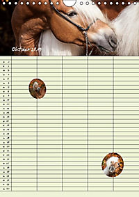 Haflinger Pferde - Stall- und Familienplaner 2019 (Wandkalender 2019 DIN A4 hoch) - Produktdetailbild 12