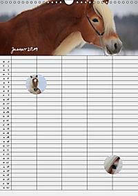 Haflinger Pferde - Stall- und Familienplaner 2019 (Wandkalender 2019 DIN A3 hoch) - Produktdetailbild 1