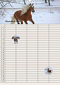 Haflinger Pferde - Stall- und Familienplaner 2019 (Wandkalender 2019 DIN A3 hoch) - Produktdetailbild 12