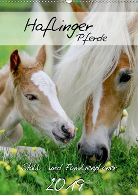 Haflinger Pferde - Stall- und Familienplaner 2019 (Wandkalender 2019 DIN A2 hoch), Natural-Golden. de