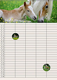 Haflinger Pferde - Stall- und Familienplaner 2019 (Wandkalender 2019 DIN A2 hoch) - Produktdetailbild 6