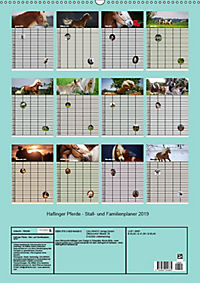 Haflinger Pferde - Stall- und Familienplaner 2019 (Wandkalender 2019 DIN A2 hoch) - Produktdetailbild 13